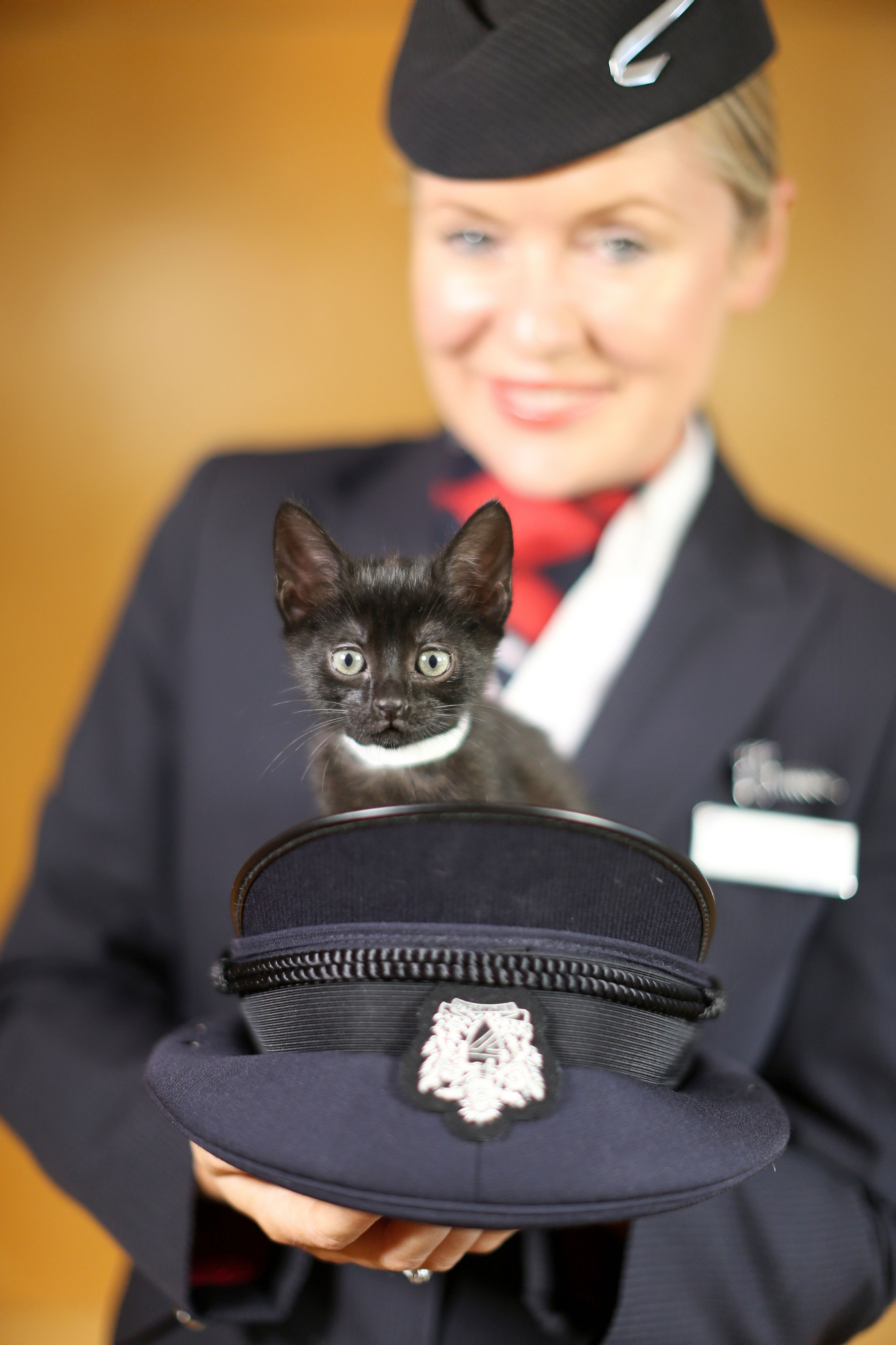 Karma the kitten with BA's Helena (C) Nick Morrish, BA